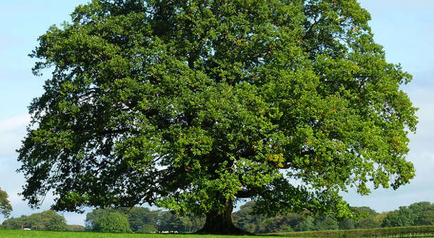 As with the oak tree and the old lady with the bag, hope springs eternal.