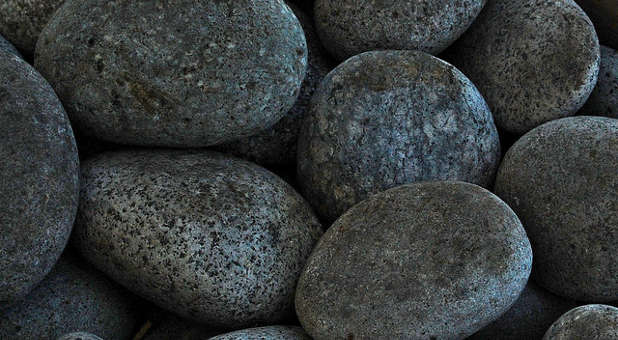 Did you ever own a Pet Rock?