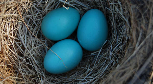 What does your family nest structure look like?