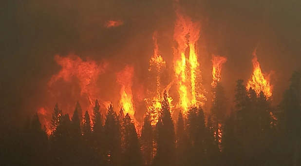 There are many economic forest fires around the world these days simply primed to become forest fires.