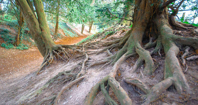 Establish your roots in the Lord.