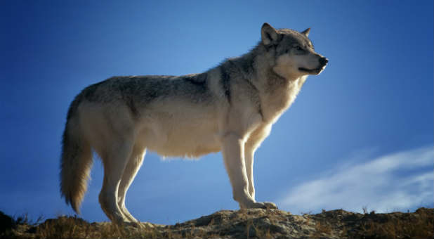 "Replace your ""lone wolf"" mentality with something much more powerful."