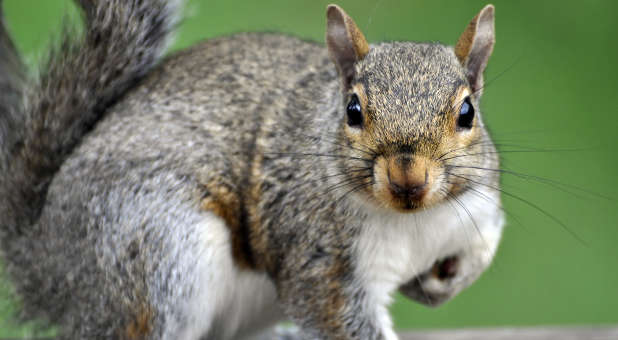 """Are you sometimes stricken with """"squirrel syndrome?"""""""